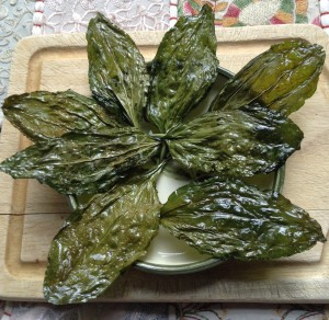 Crisp plantain (Plantago) leaf chips